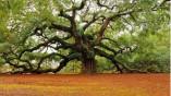 تصاویر زیبای طبیعت (۱)