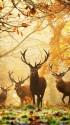 تصاویر زیبای طبیعت (۵)