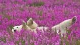 تصاویر زیبای طبیعت(۴)