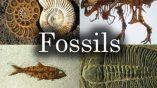 فسیل چیست و چگونه تشکیل می شود؟