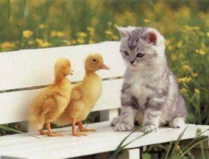 حدیث از معصومین پیرامون چگونگی رفتار با حیوانات