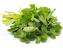 کوچک کردن سینه ها به کمک این گیاهان داروئی